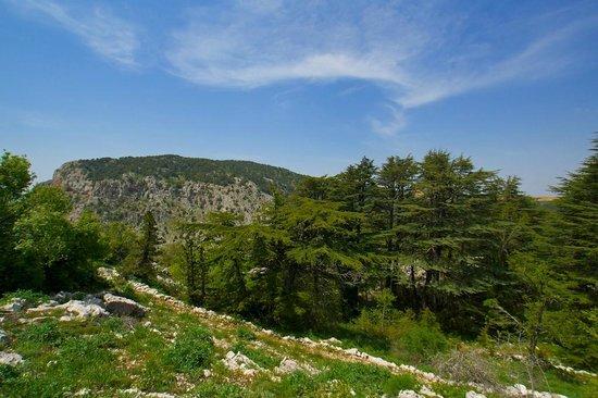 tannourine-cedars-reserve-1