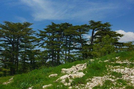 tannourine-cedars-reserve