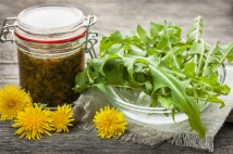 Foraged edible dandelions flowers and greens with jar of dandelion preserve