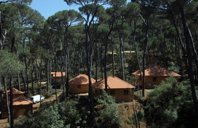 The never ending pine trees 365 days of lebanon for Achat maison coye la foret