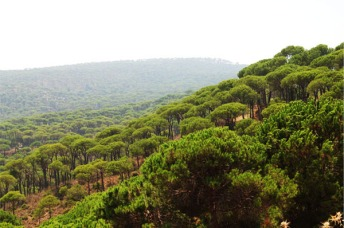 jezzine-pine-forest
