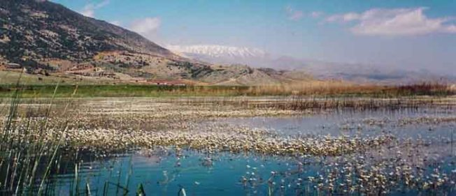 Aammiq_Wetland_in_spring