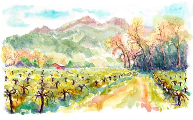 paulines-vineyard_s
