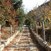 hiking_in_ehden_reserve_with_walkleb